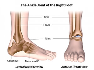 The Ankle Joint of the Right Foot